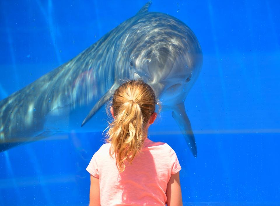 dolphin-1548448_960_720