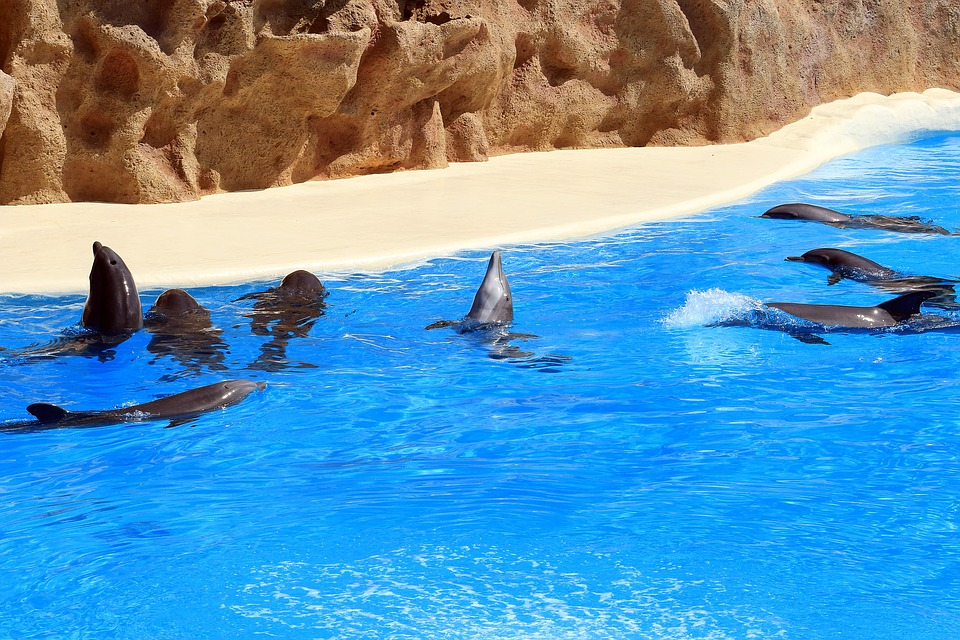 dolphins-1517227_960_720